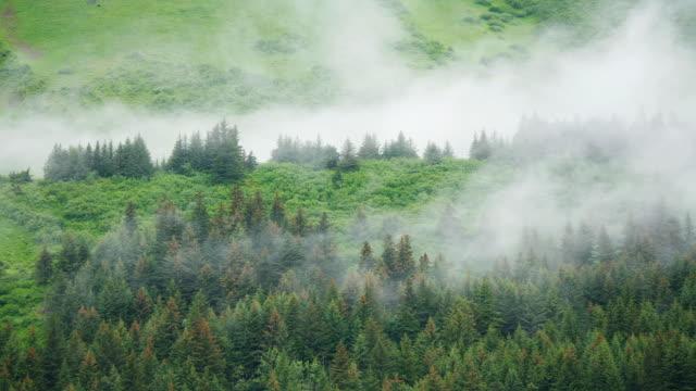 Fog rolls across an evergreen forest.