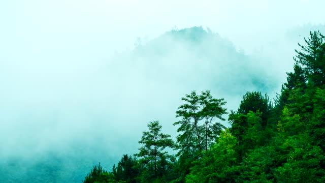 霧が山をわたるロールします。 - 松の木点の映像素材/bロール
