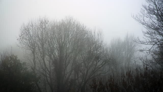 fog rolls in amidst tree tops - bare tree stock videos & royalty-free footage