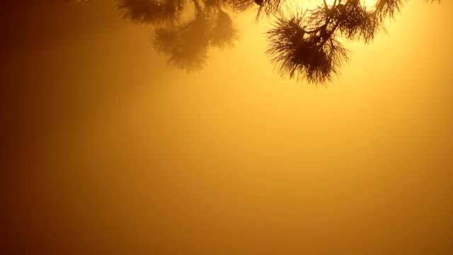 fog scene,night - pinaceae stock videos & royalty-free footage