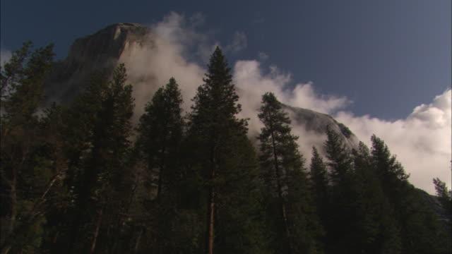 vídeos de stock, filmes e b-roll de fog settles along treetops in an evergreen forest. - parque nacional de yosemite