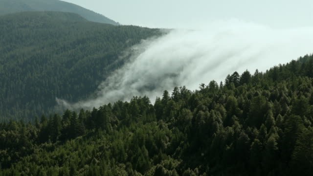 fog settles into a green valley of redwood forest in california's klamath mountains. - evergreen stock videos & royalty-free footage