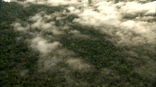 fog settles over the amazon rainforest where the amazon river winds through. available in hd. - amazon region stock videos & royalty-free footage