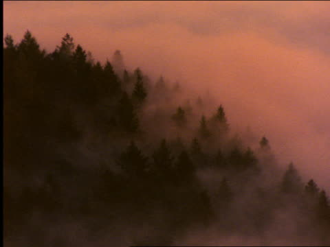 vídeos de stock, filmes e b-roll de fog thru pine trees on hill / coastal redwoods / california - 2001