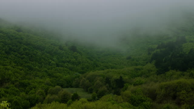 fog timelapse in virgin forrest - family tree stock videos and b-roll footage