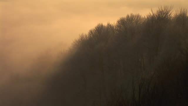 hd time-lapse loop: fog - bare tree stock videos & royalty-free footage