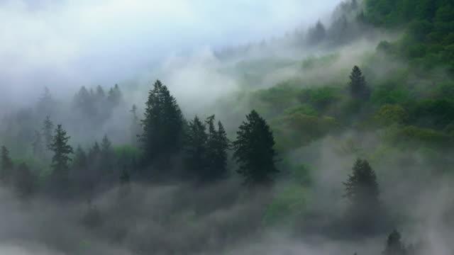 fog - wald stock-videos und b-roll-filmmaterial