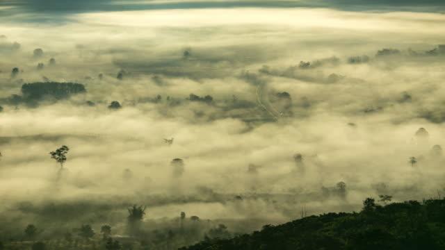 fog - tropischer baum stock-videos und b-roll-filmmaterial