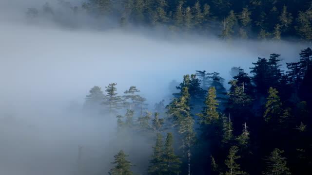 vídeos de stock, filmes e b-roll de fog wafting through redwoods - parque nacional de redwood