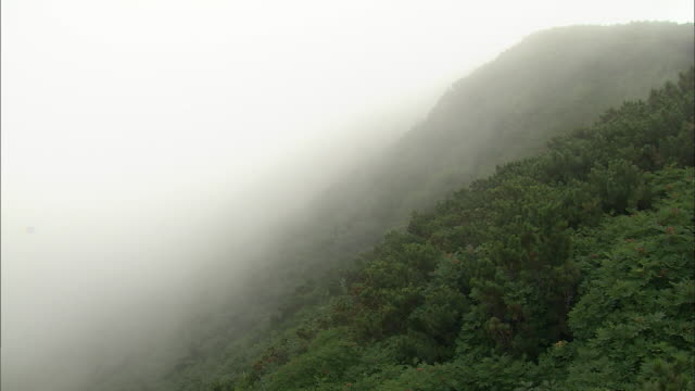 fog_daisetsuzan volcanic group, hokkaid_ - daisetsuzan volcanic group stock videos and b-roll footage
