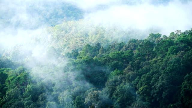 森の時間の経過の上霧の雲。 - 澄んだ空点の映像素材/bロール