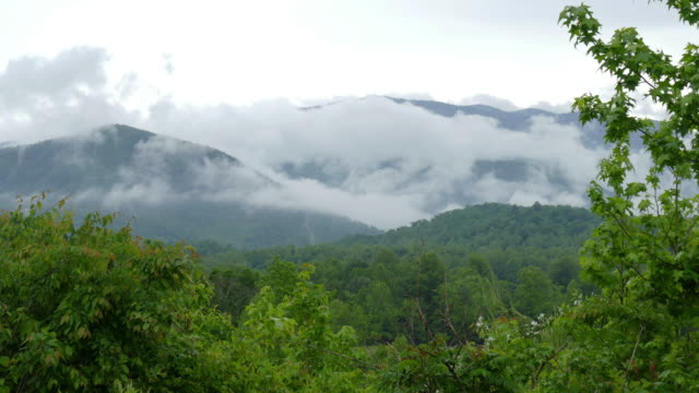 foggy clouds drift great smoky mountains national park tennessee - tennessee stock videos & royalty-free footage