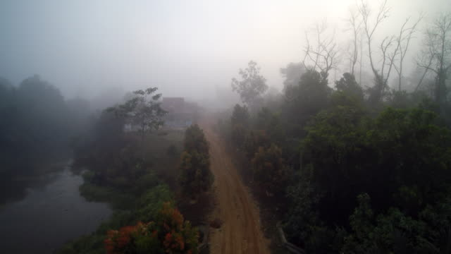 Foggy morning in palm oil fields