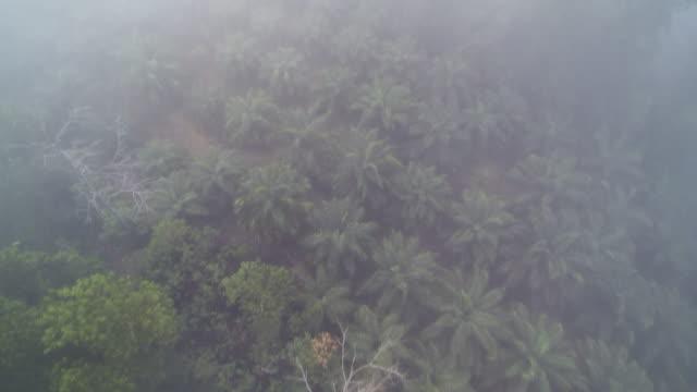 vídeos y material grabado en eventos de stock de foggy morning in palm oil fields - isla de sumatra
