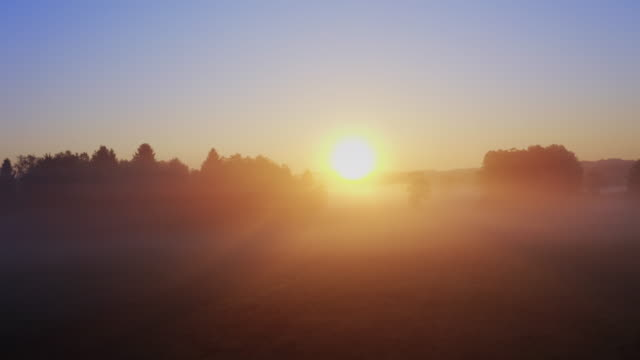 foggy morning - meadow stock videos & royalty-free footage