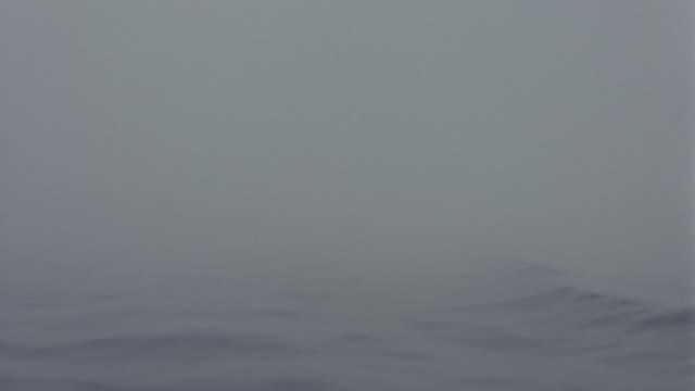 foggy ocean; studio tank - fog stock videos & royalty-free footage
