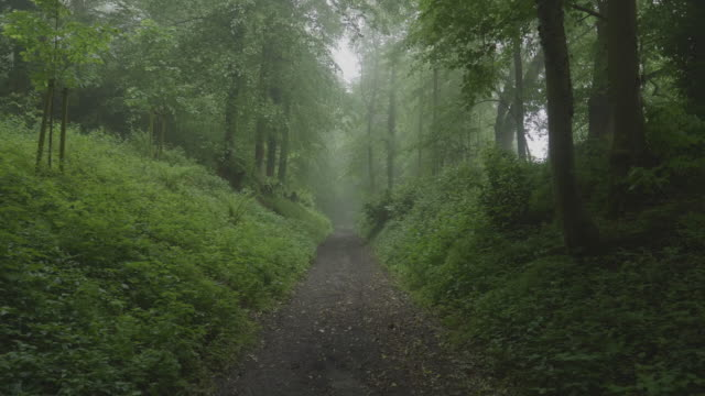 Foggy Path in the Woods
