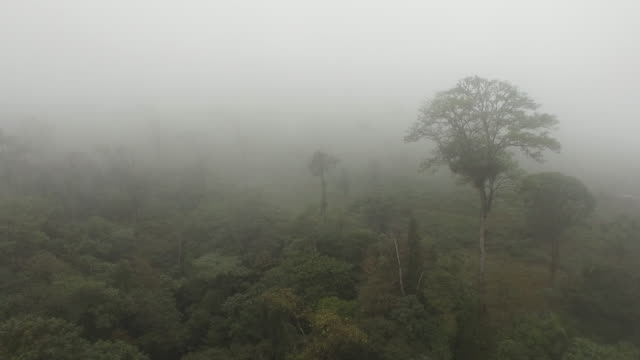 AERIAL Foggy rainforest in Costa Rica