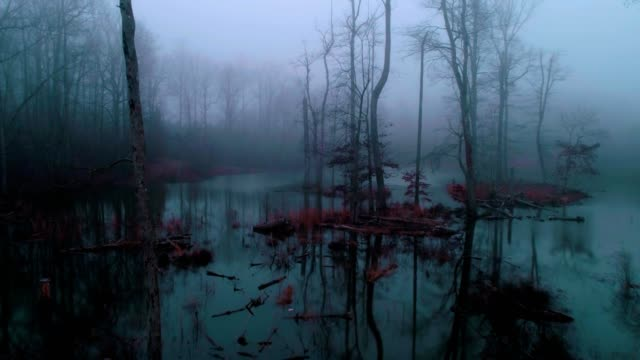foggy swamp in fort payne alabama - sumpf stock-videos und b-roll-filmmaterial