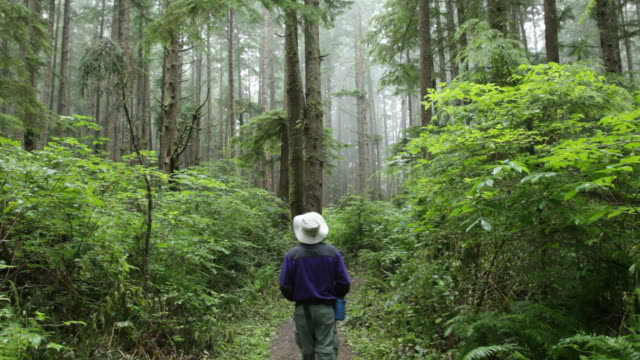 foggy temperate rainforest hiker olympic national park trail - olympic national park stock videos and b-roll footage