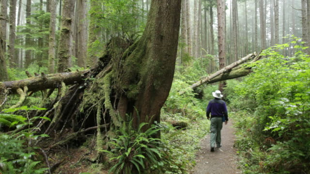 foggy temperate rainforest hiker olympic national park - olympic national park stock videos and b-roll footage
