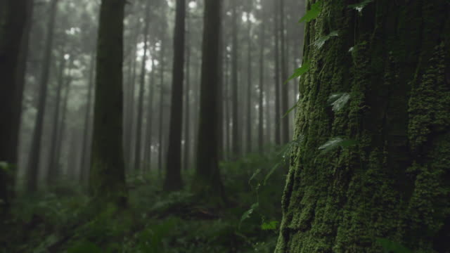 foggy view of 'gotjawal' forest / jeju-si, jeju-do, south korea - spooky stock videos & royalty-free footage