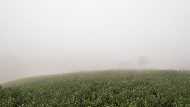 foggy view of jasmine tea plantation / nanning, guangxi zhuangzu, china - wet stock videos & royalty-free footage