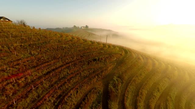 AERIAL Foggy Vineyard