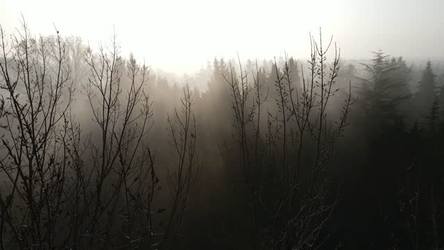 foggy weather and trees, morning fog, gloomy weather, gloomy weather and trees, aerial fog view, aerial foggy video, aerial gloom, gliding through arched trees - condensation stock videos & royalty-free footage