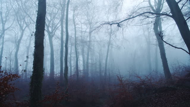 foggy woods in thick fog weather conditions, with bare winter trees in a mysterious atmosheric woodlands and scary haunted forest, beautiful blue nature landscape scenery in england, uk - bare tree stock videos & royalty-free footage