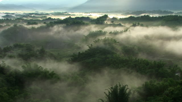 Fogs moving over trees in Taiwan