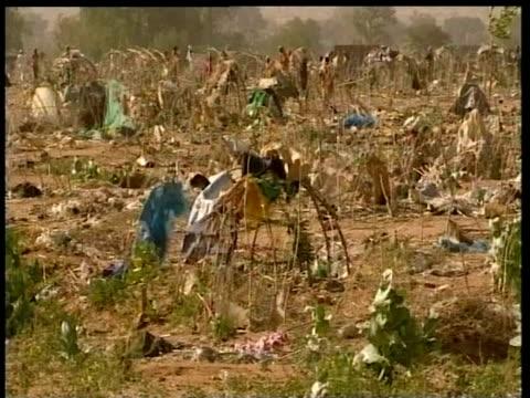 foliage and tent frames tremble as wind blows through barren refugee camp darfur nov 04 - 小枝点の映像素材/bロール