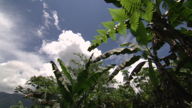 foliage blowing in the wind, blue skies and white clouds, sierra nevada, colombia - kolumbien stock-videos und b-roll-filmmaterial