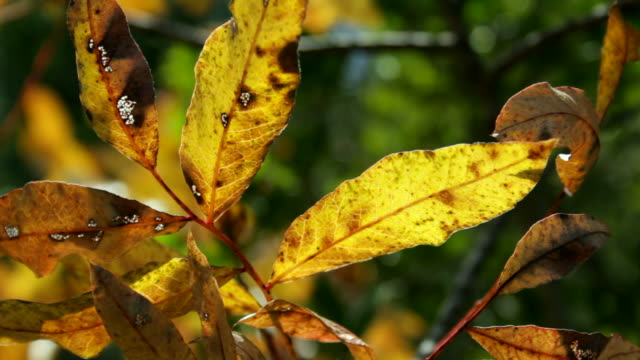 Foliage in a detail of autumn