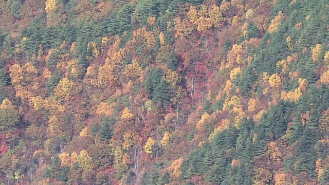 aerial, foliage season, japan - satoyama scenery stock videos & royalty-free footage