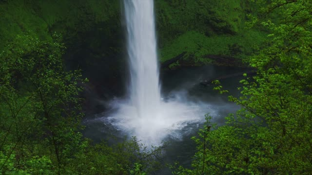 Foliage surrounds the base of the Silver Falls at the Columbia River Gorge in Oregon.