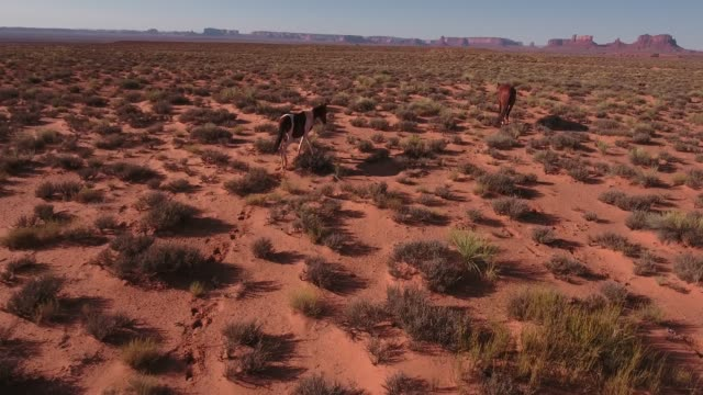 follow right side of wild horses, drone aerial 4k, monument valley, valley of the gods, desert, cowboy, desolate, mustang, range, utah, nevada, arizona, gallup, paint horse .mov - paint horse stock videos & royalty-free footage