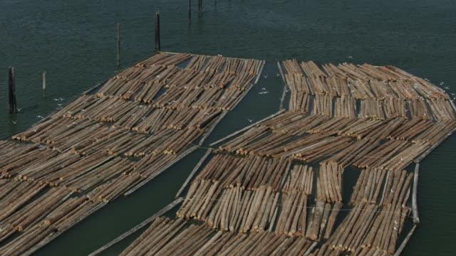 vídeos de stock, filmes e b-roll de follow shot of seagulls flying over a timber raft - caule