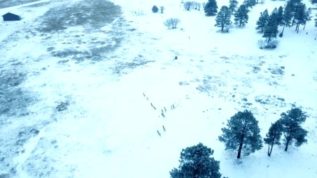 following herd of wild elk in wilderness area - wilderness area stock videos & royalty-free footage
