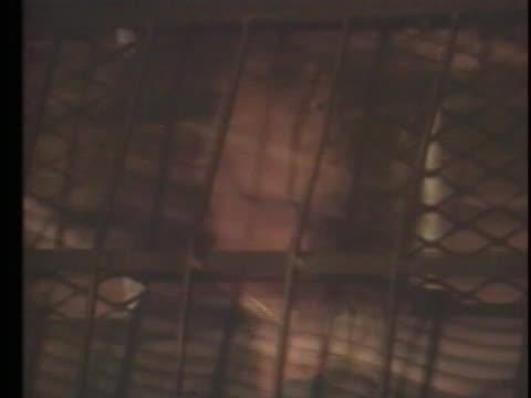stockvideo's en b-roll-footage met following his conviction serial killer richard ramirez sits in the backseat of a patrol van - passagiersstoel
