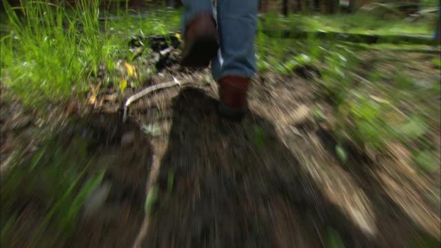 POV Following man walking through forest and picking mushroom / Missoula, Montana, USA