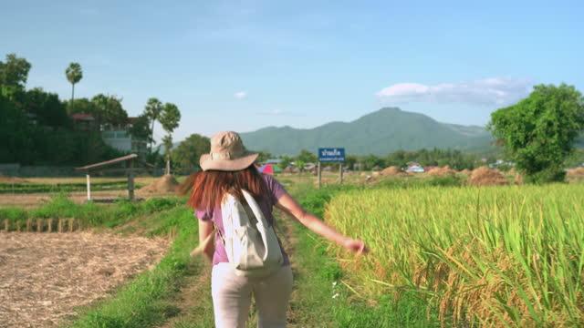 vidéos et rushes de vue arrière suivante: femme asiatique marchant avec drôle sur la crête du riz paddy entre l'oreille de riz et le riz récolté sous le coucher du soleil dans une scène agricole non urbaine, le nord de la thaïlande avec se sentir excité, émotion po - non urban scene