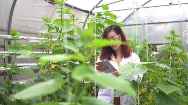 following side view: scientist inspecting melon tree and collecting data on a digital tablet - research stock videos & royalty-free footage