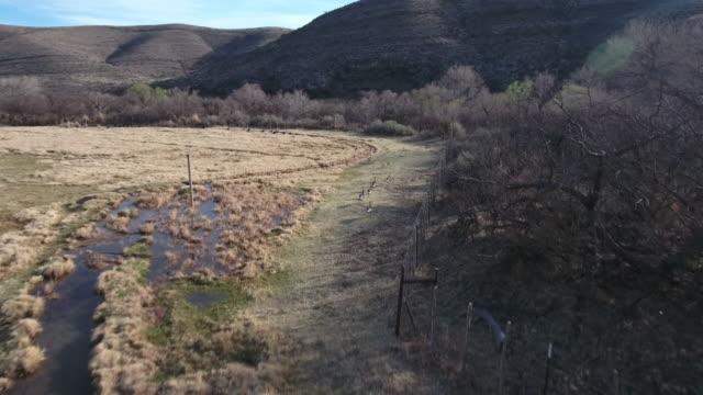 Following turkeys by fence line - Drone Aerial 4K Turkey flock, birds 4K Nature/Wildlife/Weather Drone Aerial View