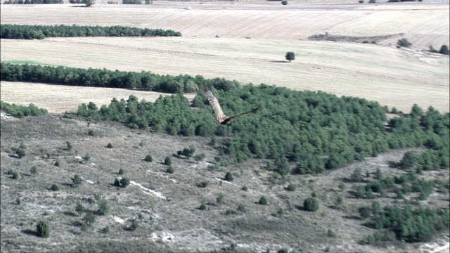 Following Vultures  - Aerial View - Castille and León, Segovia, Maderuelo, Spain