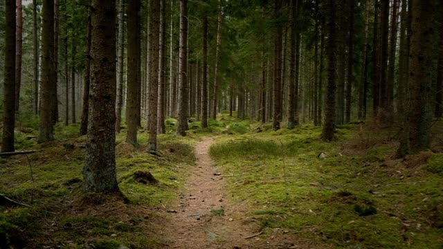 follows a narrow path in dark spruce forest - vignettierung stock-videos und b-roll-filmmaterial