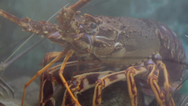 food fish restaurant - crab stock videos and b-roll footage