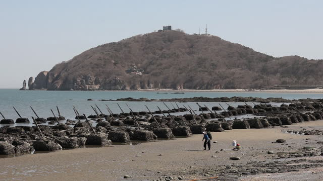 food harvesting near metal spikes used as fortification, known as dragons teeth on baengnyeong island, incheon, south korea, on monday, march 29,... - seaweed stock videos & royalty-free footage