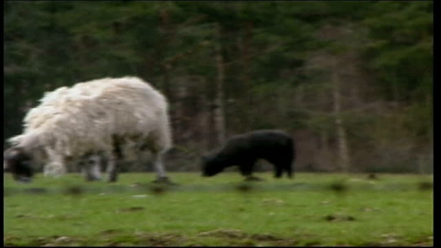 foot and mouth disease: conformation of disease in jedburgh; itn scotland: borders: jedburgh: ext gvs signs 'foot & mouth keep off farmland' & 'road... - ジェドバラ点の映像素材/bロール