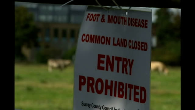 vídeos de stock e filmes b-roll de further cull / animals allowed to be slaughtered surrey ext sign saying that common land is slosed to prevent spread of foot and mouth disease closed... - febre aftosa